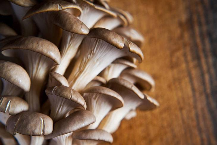how to grow oyster mushrooms 001
