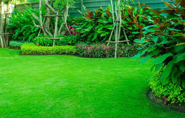 how to compact soil - lawn