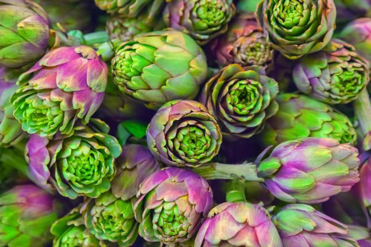 how to grow artichokes from seed 005