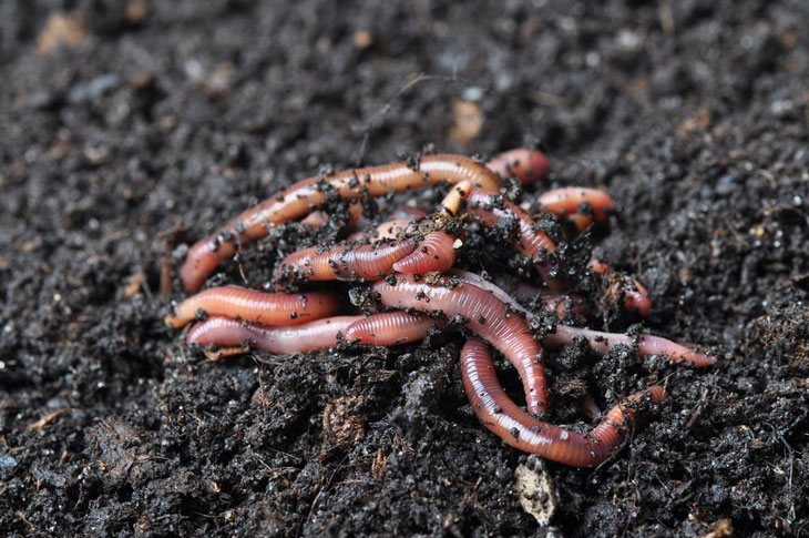 what is vermicomposting 002