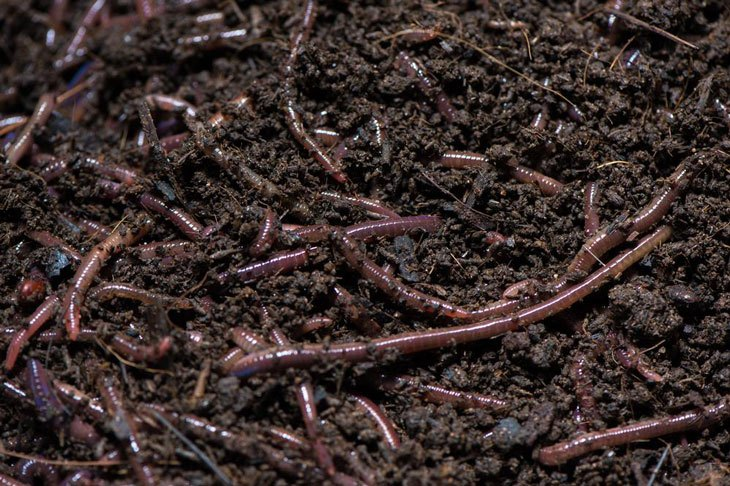 what is vermicomposting 003