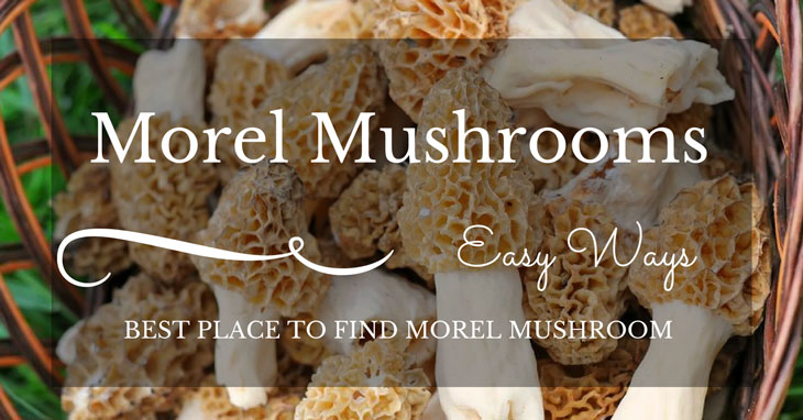 best place to find morel mushrooms