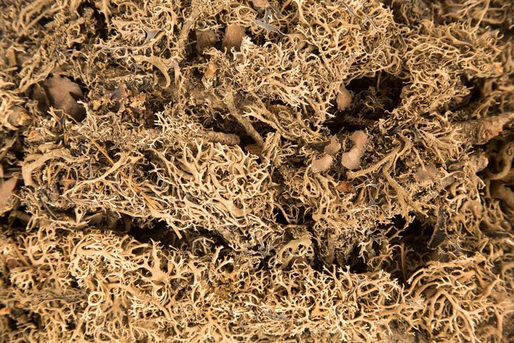 how to make peat moss 02
