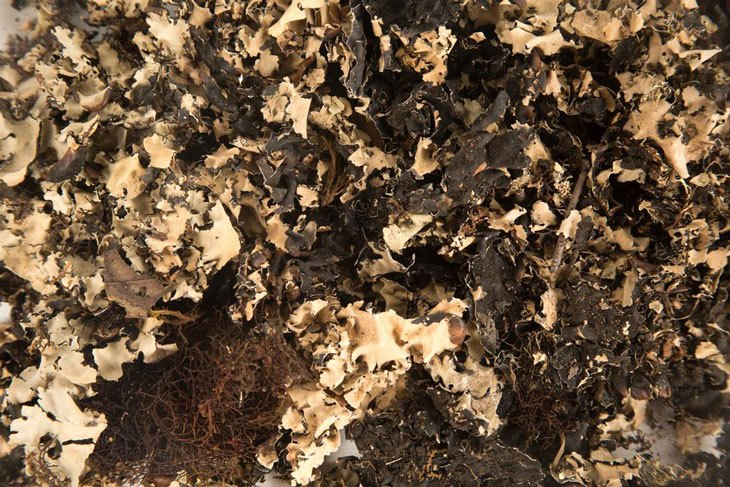 how to make peat moss 03