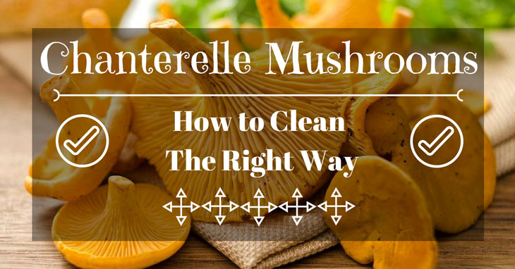how to clean chanterelles